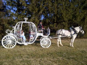 weddings/maroon_carriage_with_white_horse.jpg